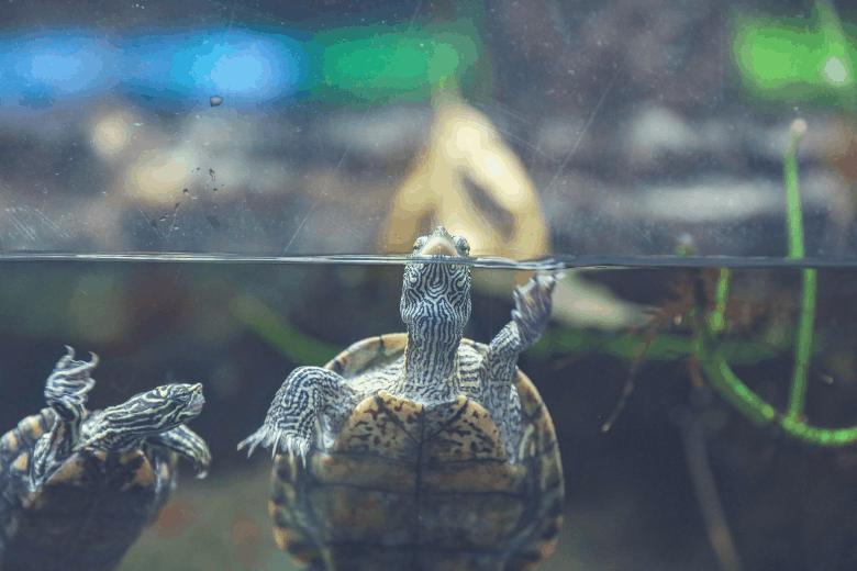 best turtle tank filters turtle in the water