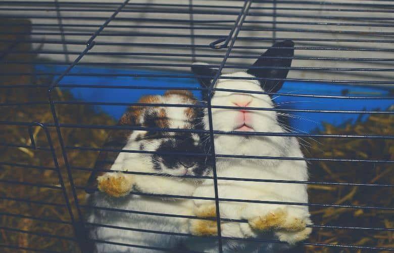 indoor rabbit cage two rabbits