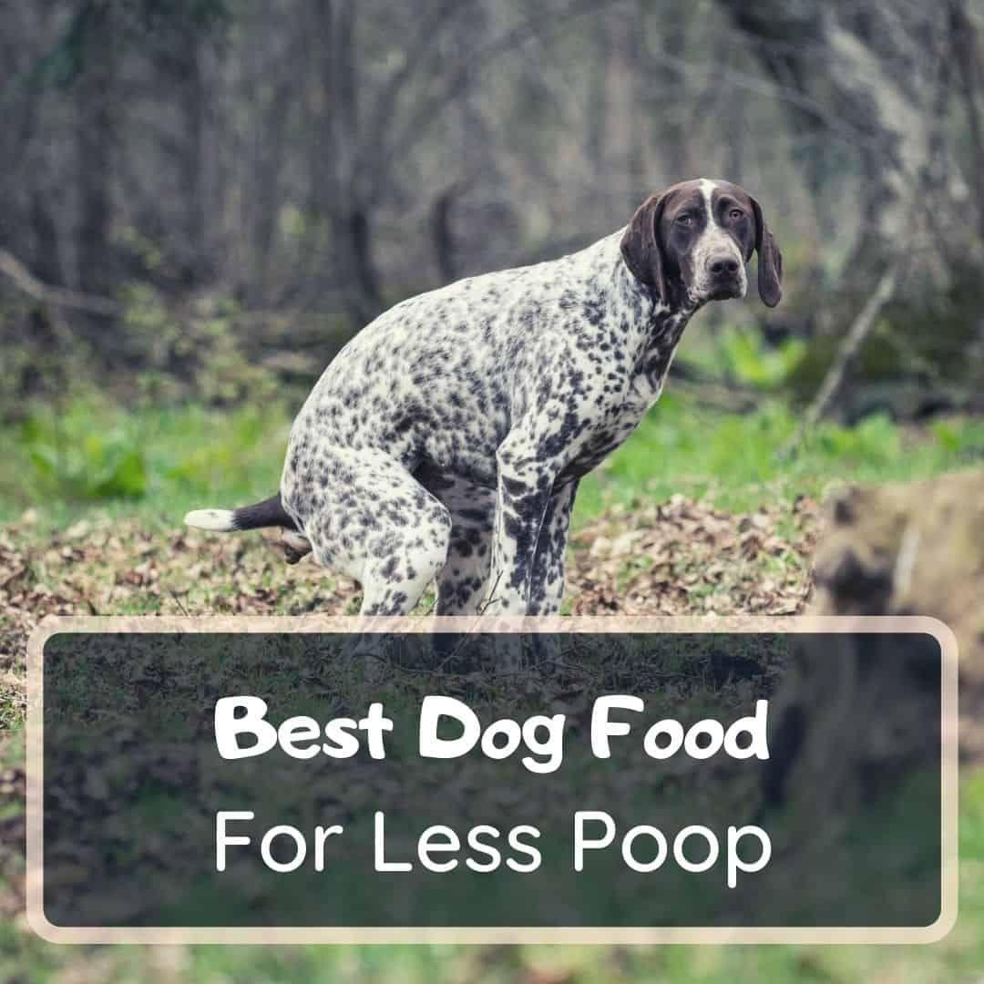 best dog foods for less poop