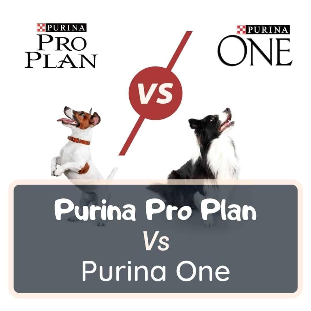 purina pro plan vs purina one