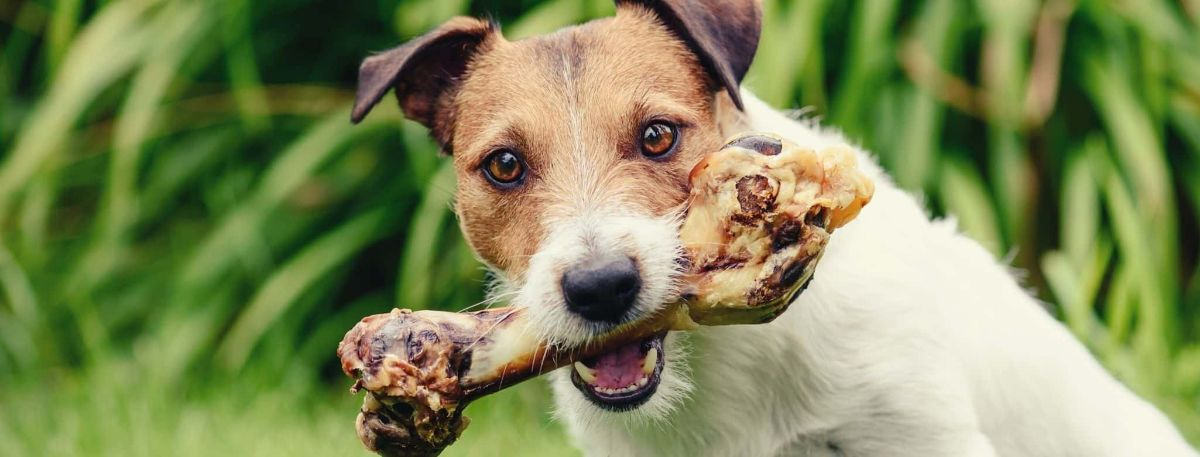 Best dog food with glucosamine